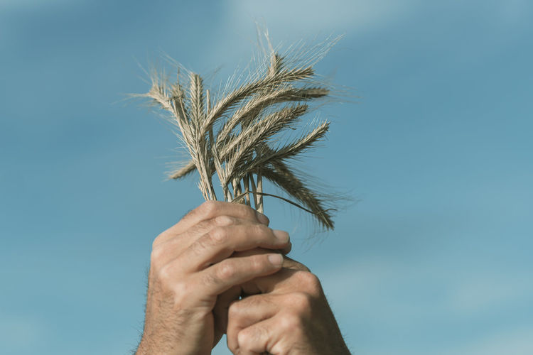 Close-up of person holding plant against sky