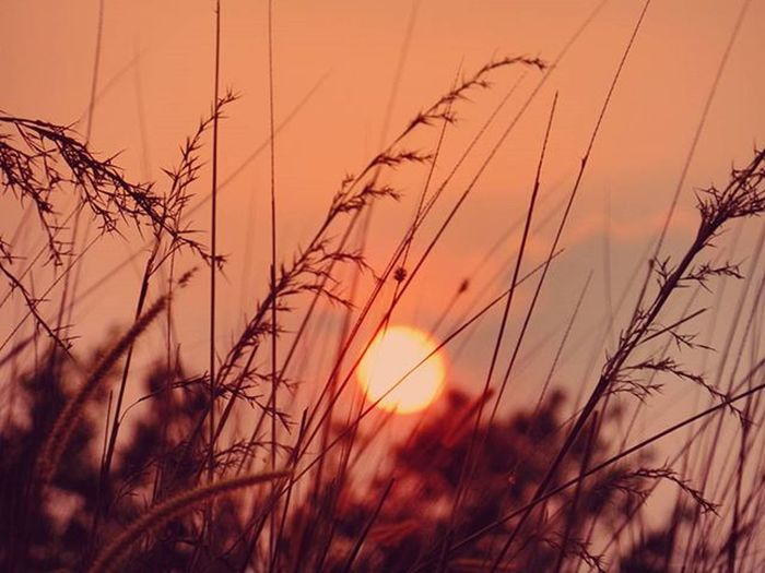Evening Sun Sunset Phantomrock Waynad Keralatourism Explorewayanad GodsOwnCountry