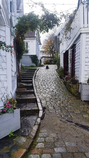Quaint cobbled street Pretty Peaceful Quaint  Cobblestone Streets Cobblestone Stone Architecture Building Exterior Architecture Window Built Structure Door Outdoors Flower No People Day Plant Nature