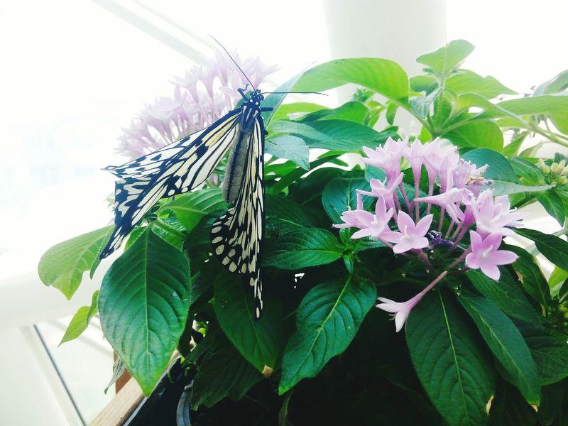 Butterfly Theme Park Beatiful Flowers