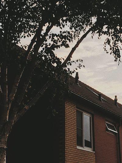 suburbia Brick