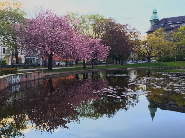 Mein Lieblingspark! Berlin Blossom City Life Springtime Reflection Beautiful Beauty In Nature The Week On Eyem EyeEm Nature Lover Light And Shadow Flowers Flower Collection EyeEm Best Shots Eye4photography  EyeEm Gallery Getting Inspired