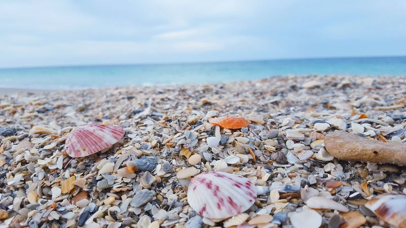 Travel Destinations Tranquil Scene No People Tranquility Sea Shell Decor Sea Shells Close Up Design Full Frame Sea Shell On Beach Sea Shells Beach Beach Seascape WeekOnEyeEm Bikini Beach Just Breathe.❤ You And Me By The Sea Taking Photos ❤ My Life Water Dream A Vacation Blue Skies ⛅ Flip Flops Just Go Outdoors