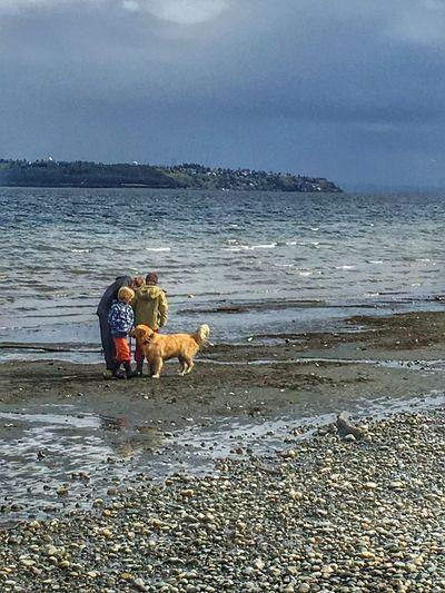Puget Sound, Washington Beachfront Seattle, Washington Bainbridgeisland Children Dog Playing Games On The Beach IPhoneography Camerateur EyeEm Best Shots EyeEm Nature Lover EyeEm Eye4photography