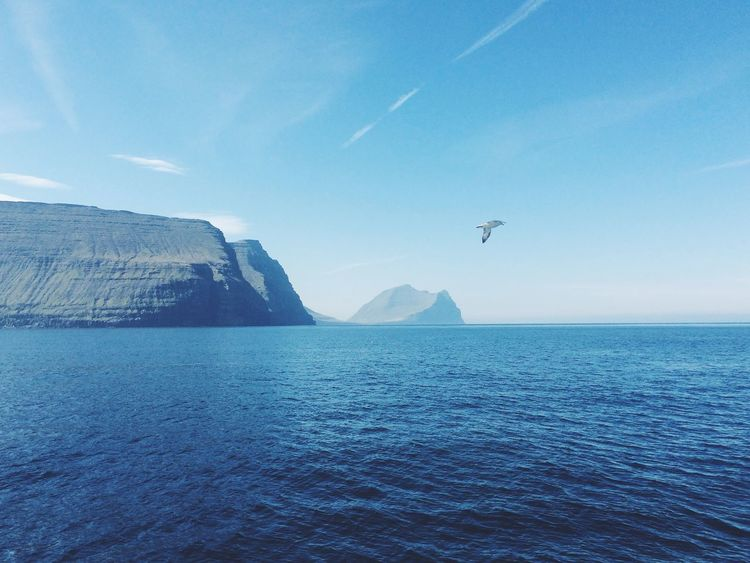 Traveling Travel Blue Island Faroe Islands Birds Bird Landscape View Nature