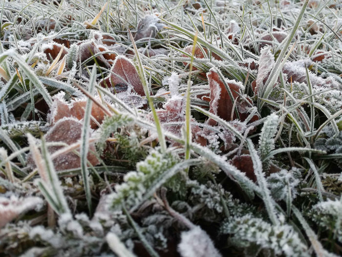 """""""cold morning"""" Beauty In Nature Close-up Cold Temperature Day Detail Grass Grass Growth High Angle View Hoarfrost Ice Macro Nature Nature Nature_collection No People Outdoors Plant Plant Snow Weather Winter Winter Winter Wonderland Wintertime"""