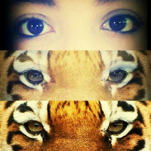 like a tiger ! roooaar ♥ Escaping
