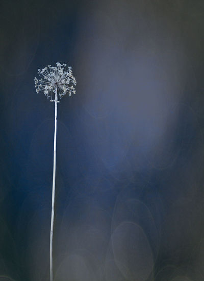 Low angle view of dried flower against sky