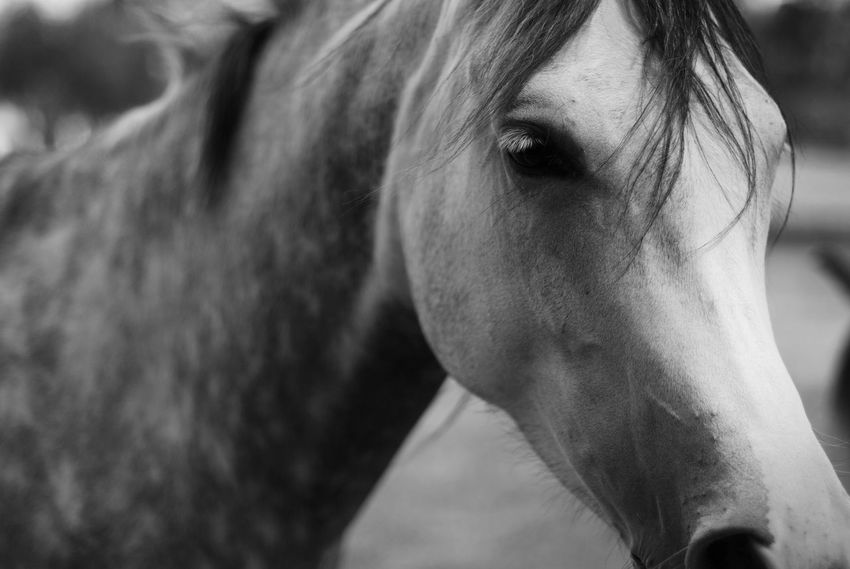 Animals Arabian B&w Blackandwhite EyeEm EyeEm Gallery Fine Art Photography Hanging Out Hello World Horse Horses Light And Shadow Mono Monochromatic Monochrome Nature Nikon Parenthood Stables The Week On Eyem