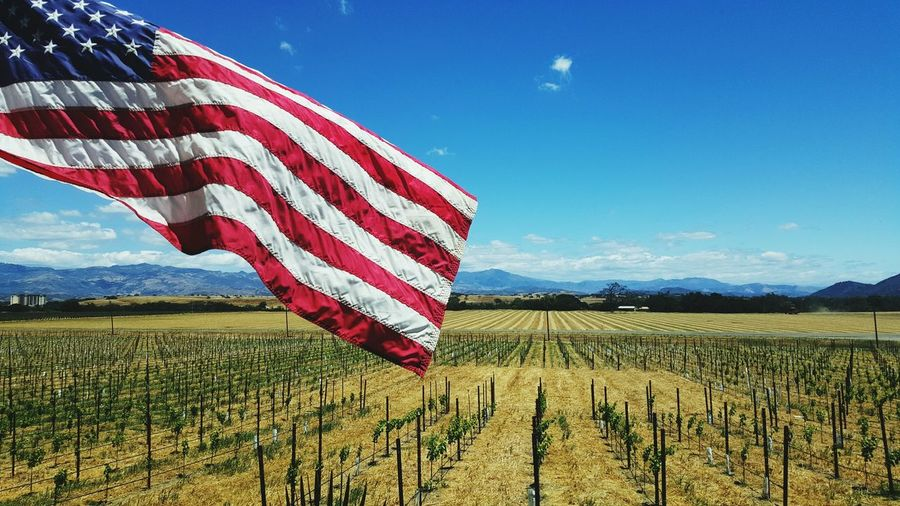 Wine Tasting My Point Of View Sitting On The Edge Baby Vines Rows Of Things Rows Of Trees American Flag Blowing In The Wind... FEELING RELAXED Santa Ynez Valley Mountains And Valleys Dry Land Taking Photos The Great Outdoors - 2016 EyeEm Awards Red White And Blue Landscape_Collection TakeoverContrast Sold On Eye Em