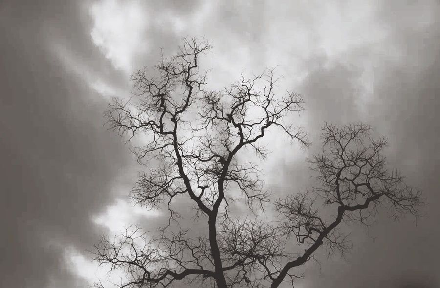 The trunk stretch to the sky Sky And Clouds before the storm arrives Taking Photos Eyemphotography Hi! Scene Tree Black&White