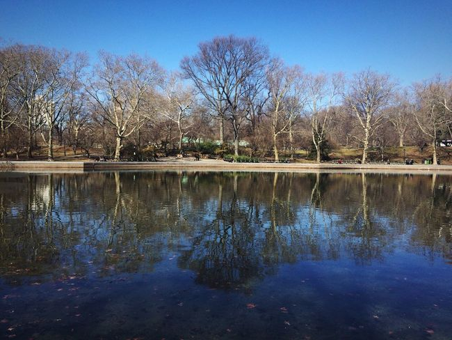 Springiscoming Nyc Moments Central Park