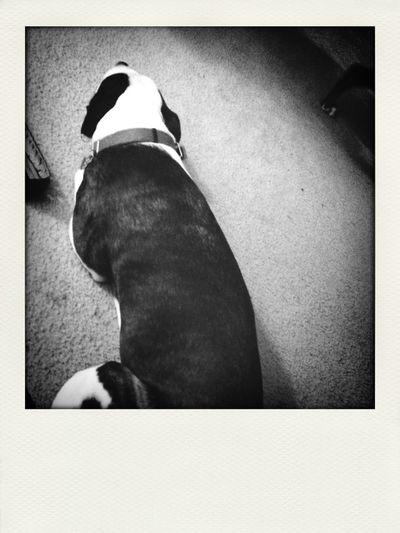 Henry waits First Eyeem Photo