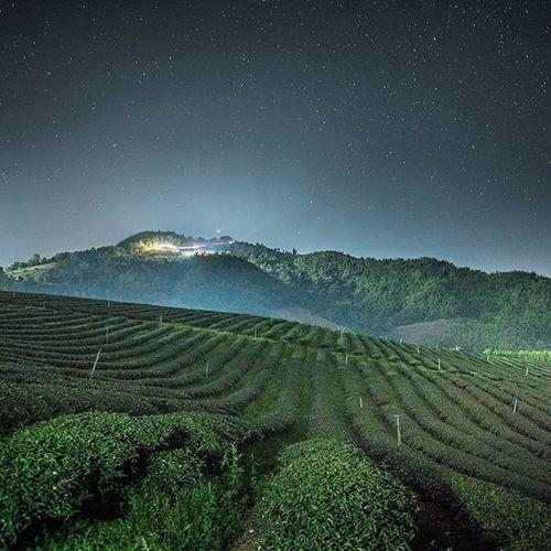 ดาวก็สวย ชาก็หอม Thailand Thetrippacker Thaitraveling Loves_siam Amazingthailand Worldmastershotz_asia Chianghaijudpai