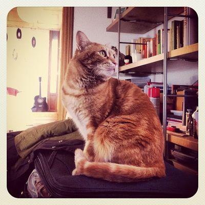 Camaron voyager #votage #maleta #camaron #gato #cat #catsofinstagram #suitcase #madrid #igscout #_wg #instapic #instagramer #insta_crew #instamillion #tagstagramers #instago #instagroove #igersmadrid #picoftheday #insta_ñ #iphonesia #instamood #earlybirdo Instagramer Catsofinstagram Cat _wg Instagroove Instapic Gato Instamillion Madrid Tagstagramers Iphonesia Suitcase Picoftheday Insta_ñ Instamood Igersmadrid Instago Earlybirdonly Maleta Camaron Insta_crew Votage Igscout Earlybirdlove