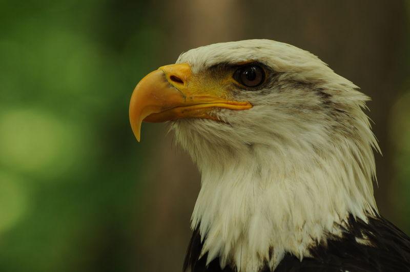 Animal Eye Bird