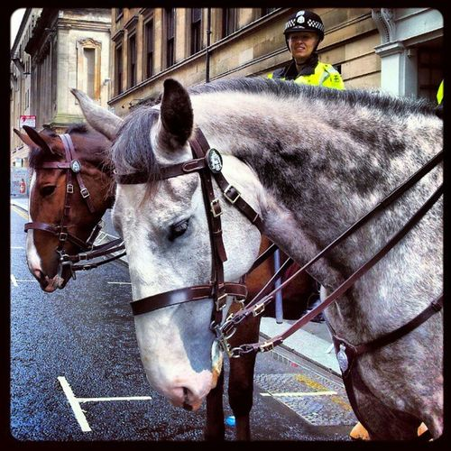 'Police Horses' Georgesquare Glasgow  Scotland Police MountedPolice Horses Horse Equine Security igscout igscotland igtube igaddict Igers igdaily Tagstagram most_deserving instapet instagood Instagrammers picoftheday bestoftheday Primeshots