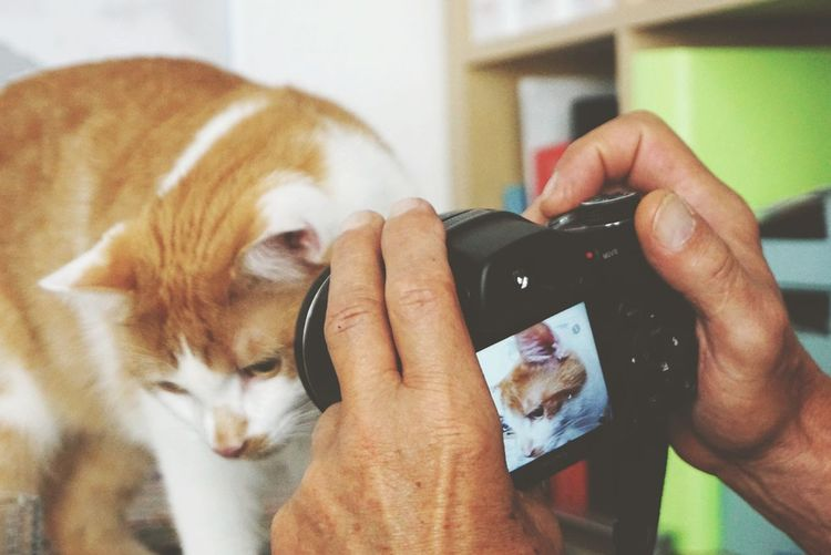A pic in a pic😉 lovely cat from my daughter♡ Pets Animal Holding Adults Only One Animal One Person Human Hand Technology People Vet  Wireless Technology Close-up Cat Catlovers Adult Pet Photography  SonyAlpha6000 Sony A6000 Indoors  Human Body Part Fresh on Market 2017 The Week On EyeEm