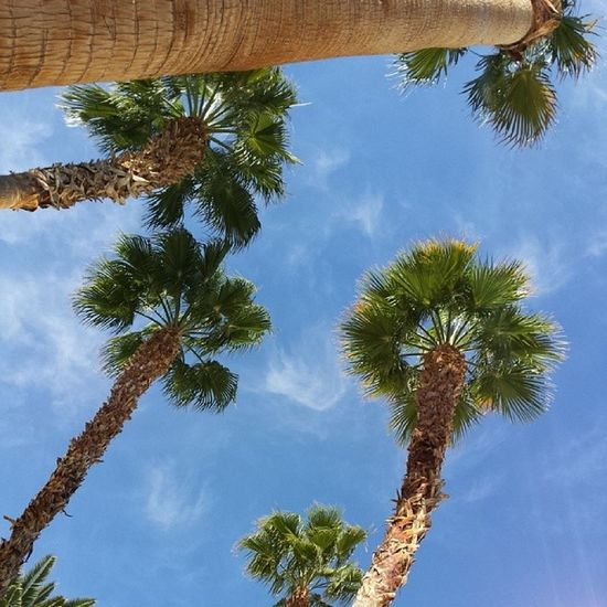 Another lovely view of a blue sunny sky. Poolday Sunnysunday MGM Lasvegas
