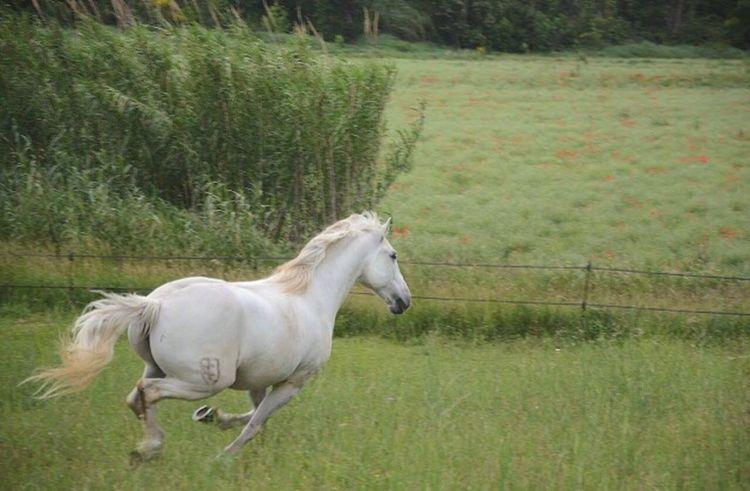 • A la recherche de la liberté • Horse Spring Passionphotography Goodday Lands Cape Animal Wild