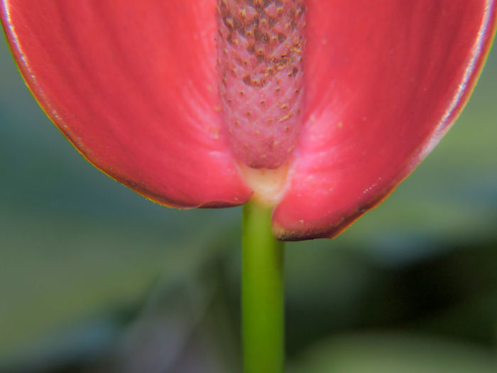 Close-up of flower growing outdoors