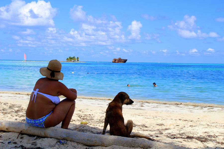 Animal Themes Beach Beauty In Nature Caribbean Caribbean Life Caribbean Sea Colombia Day Dog Domestic Animals Horizon Over Water Latin America Leisure Activity Mammal Nature One Animal One Person Pets Real People San Andres Island,Colombia Sea Sitting Sky South America Water