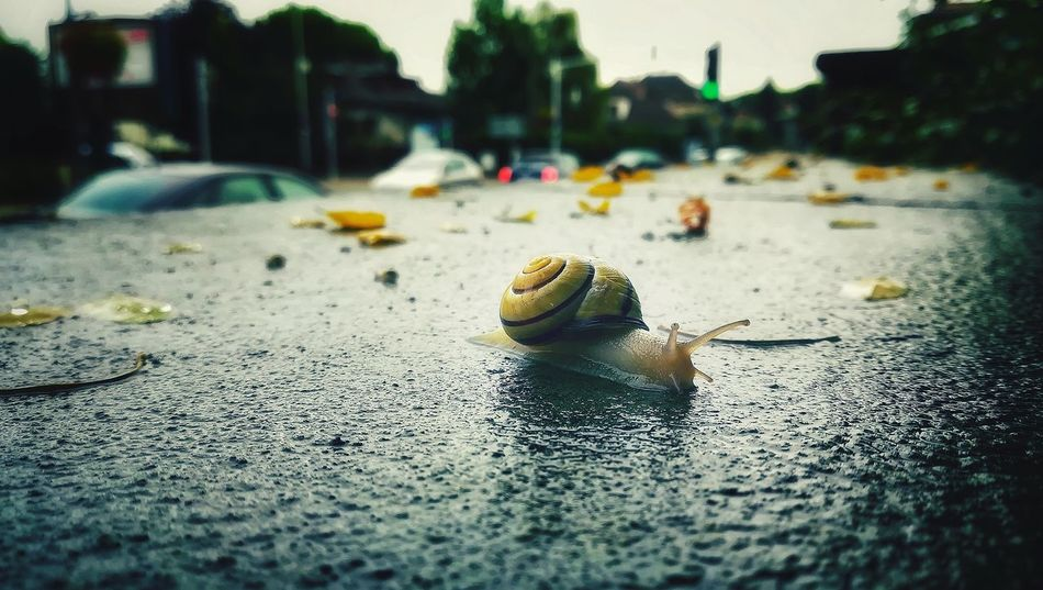 Each boat has its owncourse now and each itsown destiny.. EyeEmNewHere Slowlife Escargot Rainy Days Animal Life Animal Antenna