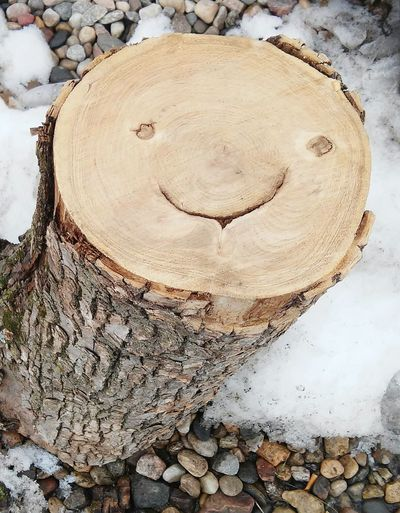 Showcase March Cheese! Check This Out Hi! Hello World Minnesota Tree Love Natural Smile :)