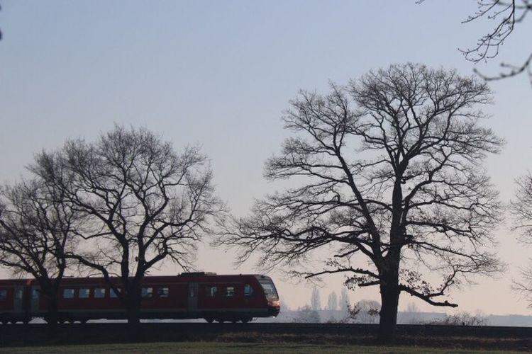 Fernweh ... Exploring New Ground Trees EyeEm Nature Lover Train