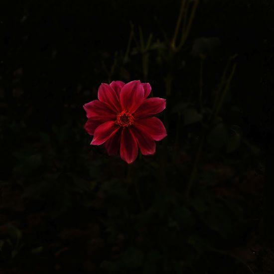 that pretty one Mobilephotography Samsung Galaxy A5 Flower Oneinamillion Beautyinnature  RainyDay Hopeindarkness Highlights