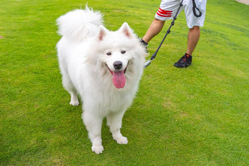 Dog standing on green grass