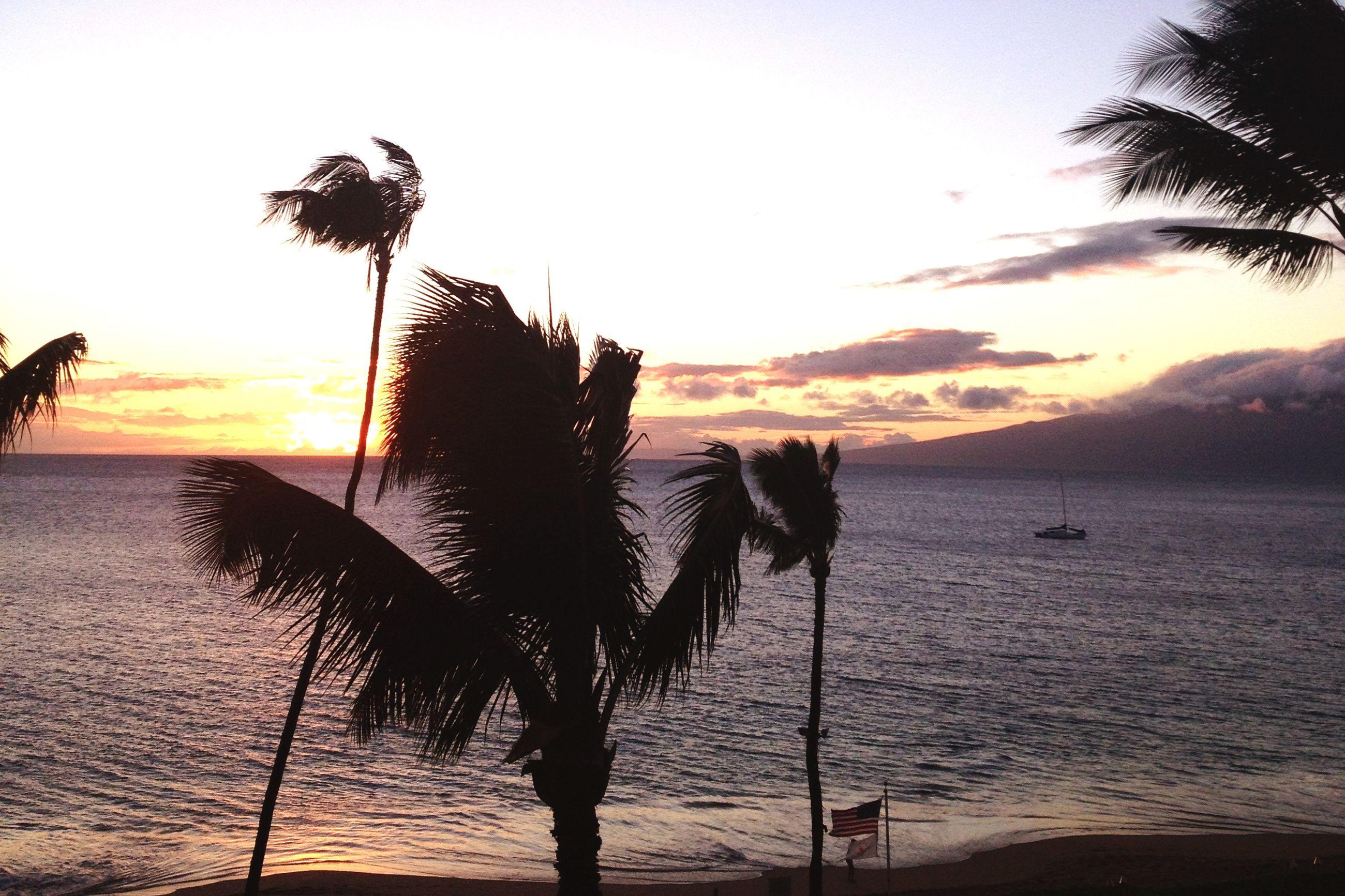 sea, water, sunset, silhouette, tranquility, horizon over water, tranquil scene, beach, scenics, sky, beauty in nature, palm tree, nature, shore, idyllic, tree, ocean, outdoors, dusk, non-urban scene