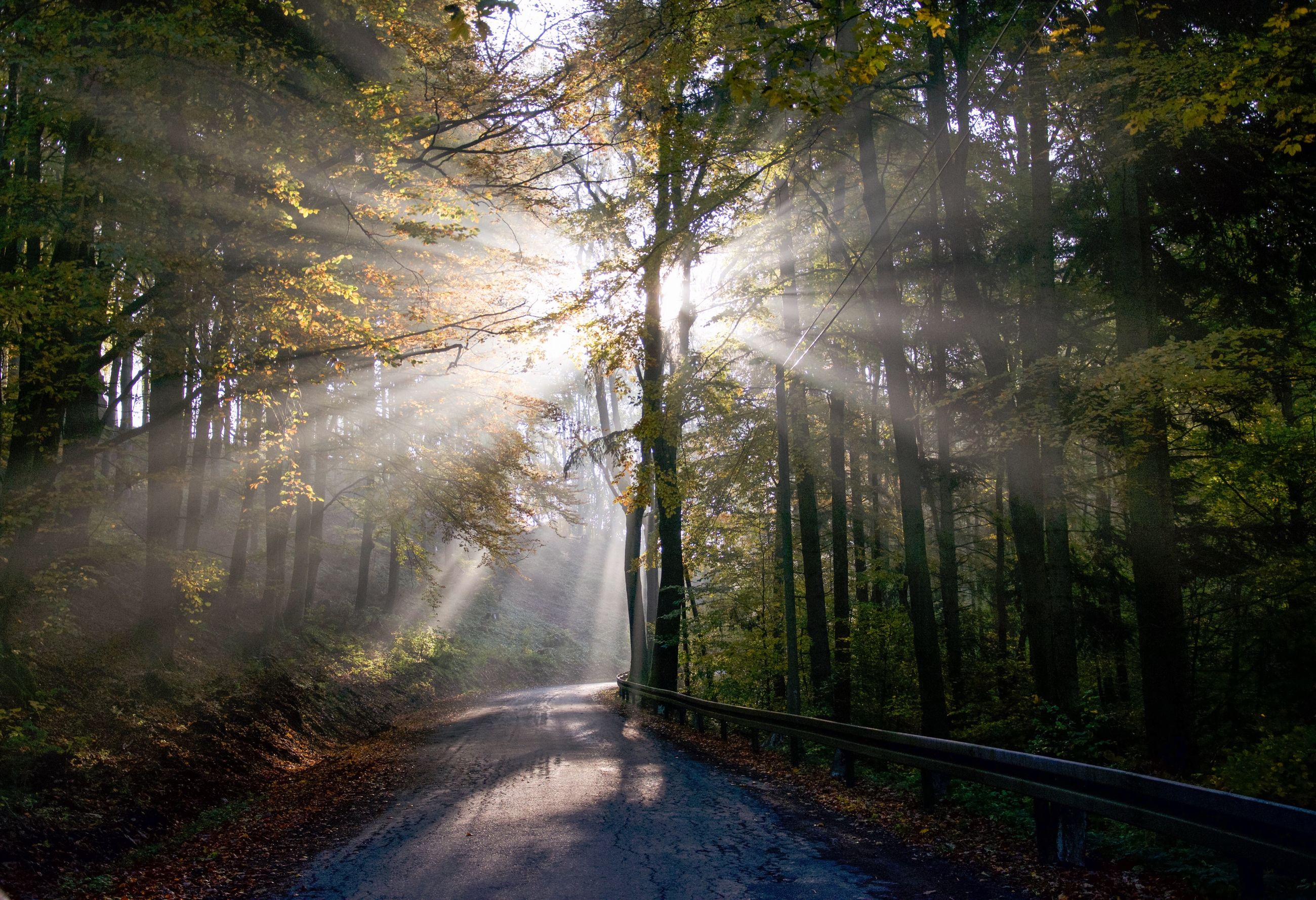 tree, forest, nature, sunbeam, road, day, sunlight, no people, scenics, outdoors, the way forward, fog, beauty in nature, mountain, sky