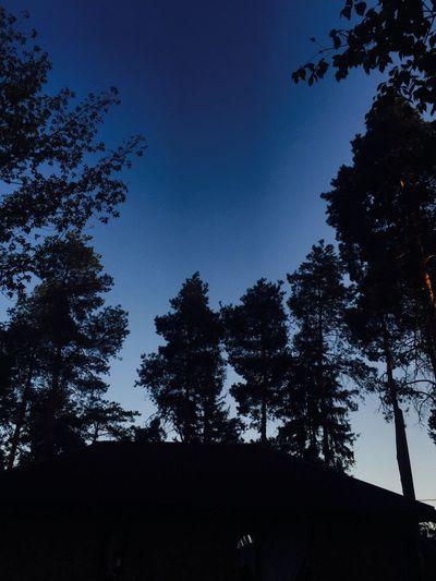 Tree Sky Nature No People Day Silhouette Blue Dark Outline Beauty In Nature Outdoors Krasnodar Krdphoto