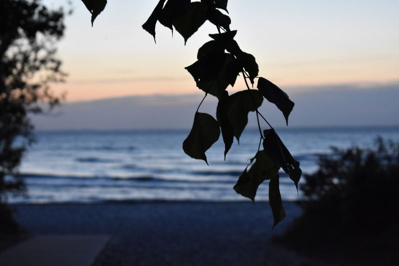 Lübecker Bucht Betterlandscapes Sunset Water Sky Sea Beach Nature Land Silhouette Tranquility Focus On Foreground No People Horizon Over Water Beauty In Nature Hanging Tree Scenics - Nature Outdoors Horizon Plant