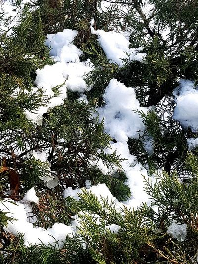 Snow Tree Full Frame Backgrounds Sky Close-up