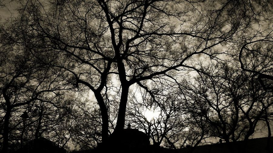 Silhouette Bare Tree Tree Branch Tranquility Low Angle View Scenics Nature Beauty In Nature Sky Outdoors Dead Plant Darkness Scary