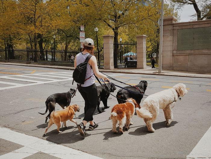 Dog Lover. Boston Common, Boston, USA. Galaxy Note 5 | 4.3mm equiv 28mm | 1/1572 sec | f/1.9 | iso 40. Wanderlust, Street Photography, Urban Exploration.