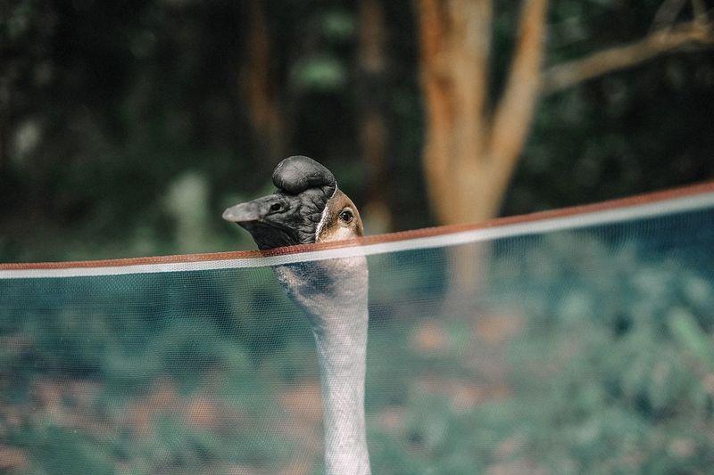 Close-Up Of Bird Behind Net