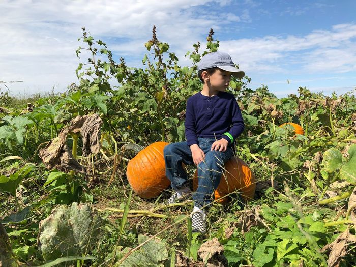Boy looking away while sitting on pumpkins