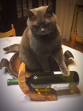 Wine Moments Domestic Cat One Animal Domestic Animals Pets Animal Themes Feline Looking At Camera Indoors  Mammal Table Cat Portrait No People Day EyeEm Best Shots Wineglass Alcohol Red Wine Wine