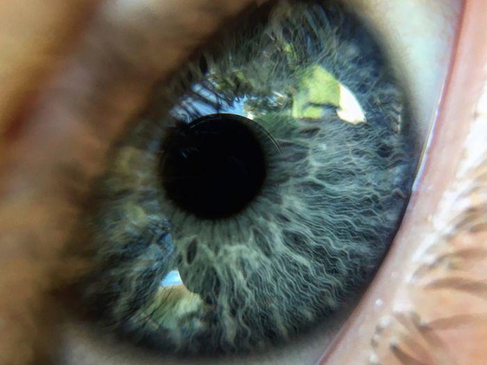 Macro Photography Eye Blue Eyes