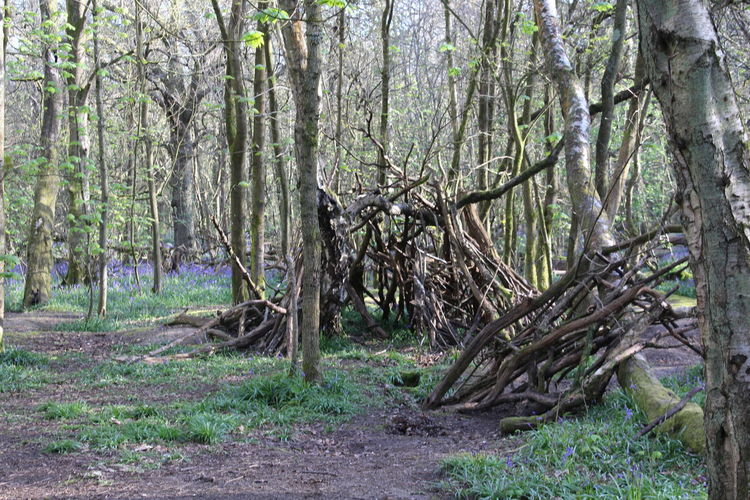 Hidden Den Hidden Gems  Kingswood Bluebell Woods Woods Natural Beauty