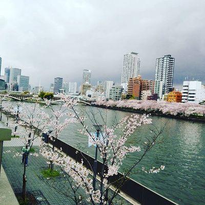 Sakura OSAKA Japaneseculture Cherryblossom