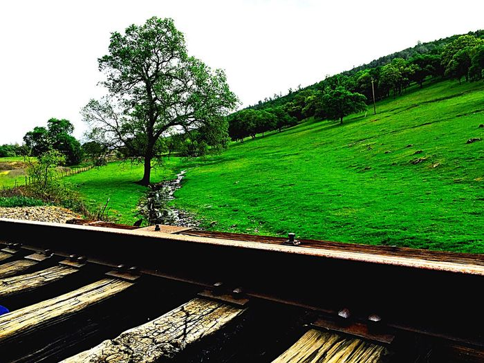 Popular Photos Tracks Train Train Tracks Traveling Mint by Motorola Trees Travelling TreePorn Grass