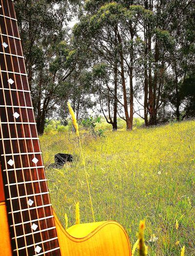 Coleclark EyeEm Selects #EyeEmNewHere Victoria #ColeClark Aboriginal Land Aurthurs Seat Australian Landscape Mornington Peninsula Australia Pretty Tree Close-up In Bloom