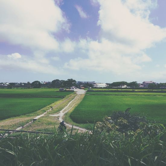 Cloud Field Garageimg Grass Grassy Green Color Landscape Nature Outdoors Taiwan View Pastel Power Rice Field Beauty In Nature Tranquility Chilling