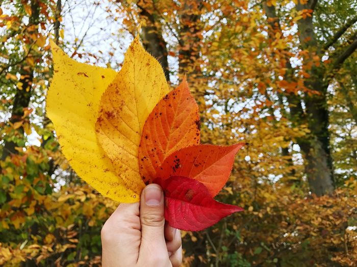 Hand Autumn Fall Fall Colors Fall Leaves Autumn Colors Autumn Leaves Human Hand Change Autumn Real People Personal Perspective Tree Human Finger Leaf Holding One Person Focus On Foreground Human Body Part Outdoors Nature Day The Great Outdoors - 2017 EyeEm Awards