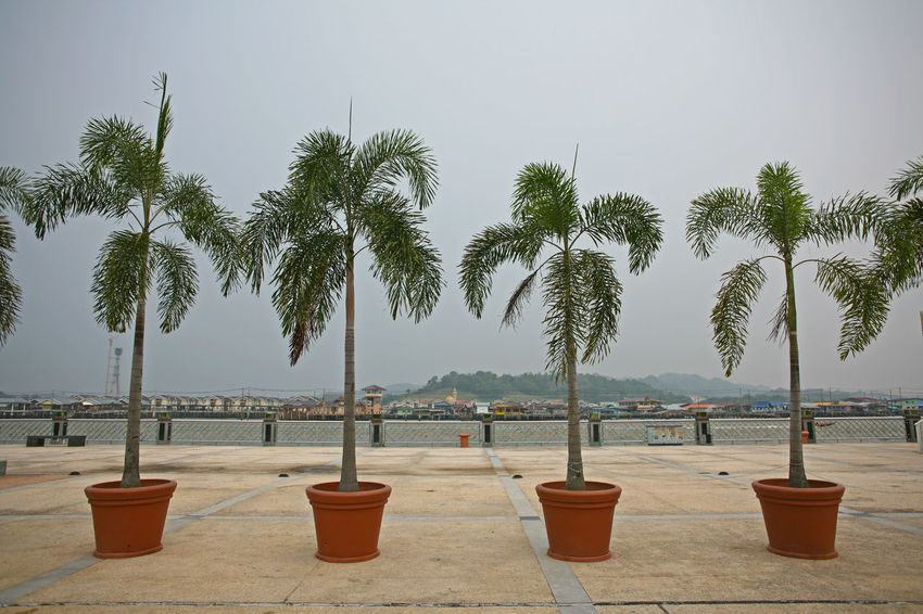 Symmetrically arranged plant pots with palm trees in the an empty downtown riverside scene in the Sultanate of Brunei (Negara Brunei Darussalam) Brunei Brunei Darussalam Beauty In Nature In A Row Nature Outdoors Palm Tree Scenics Tree Tree Trunk