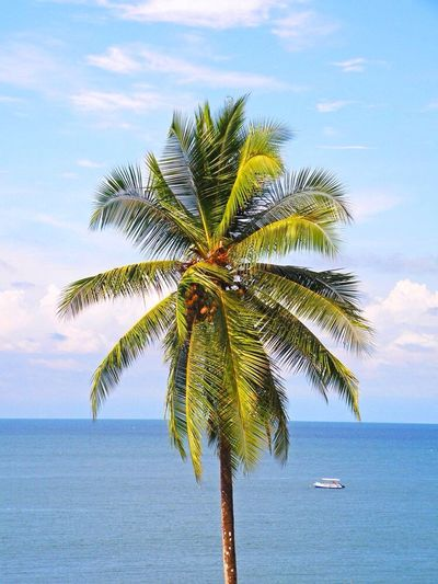 Palm Trees Palms Palmtree Boats Boat Ship Coconut Horizon